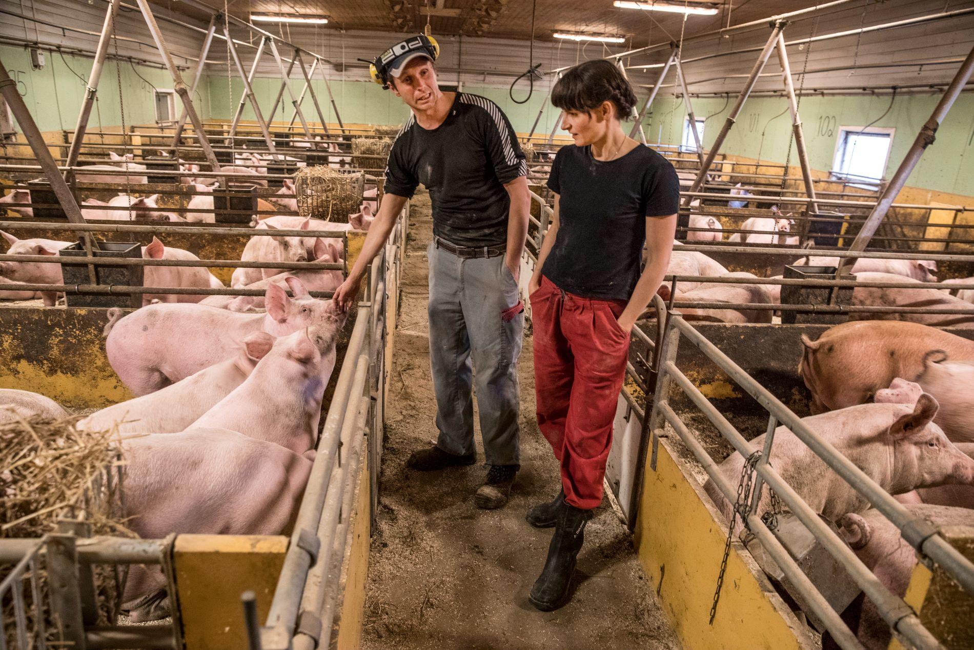 TOPPUTØVERE: Med over 600 griser på gården, er Maria og Arne Elias Østerås opptatt av å se hver enkelt gris.