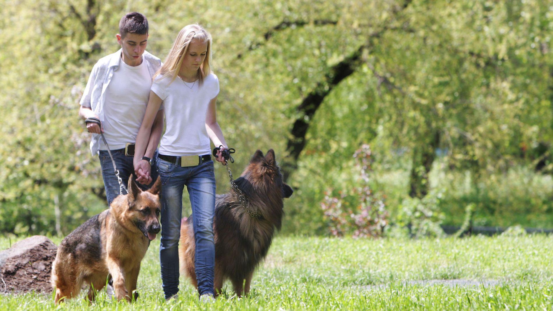FORDELING AV KJÆLEDYR: Har dere hun eller annet kjæledyr kan det være lurt å snakke om hva som skal skje med hunden ved et eventuelt brudd, og skrive dette ned i en samboerkontrakt, oppfordrer advokat Birgitte Schjøtt Christensen.