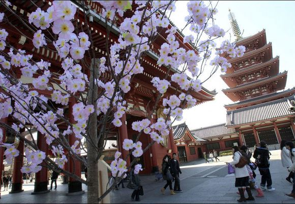 Japan vil lokke turister med gratisreise