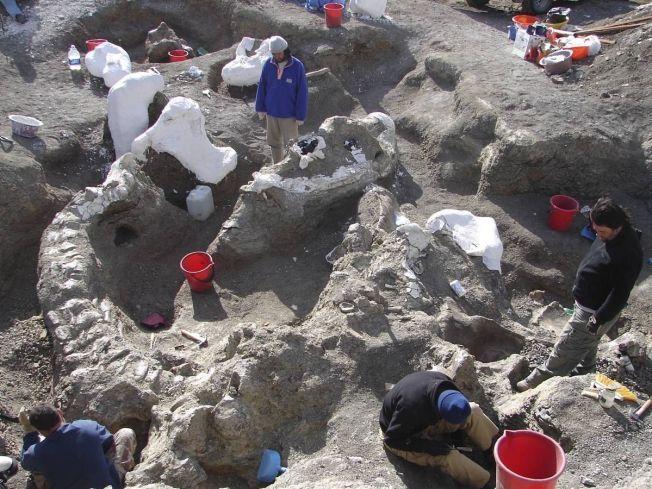 GRAVER: Bildet er fra utgravningene i Argentina, som foregikk mellom 2005 og 2009.
