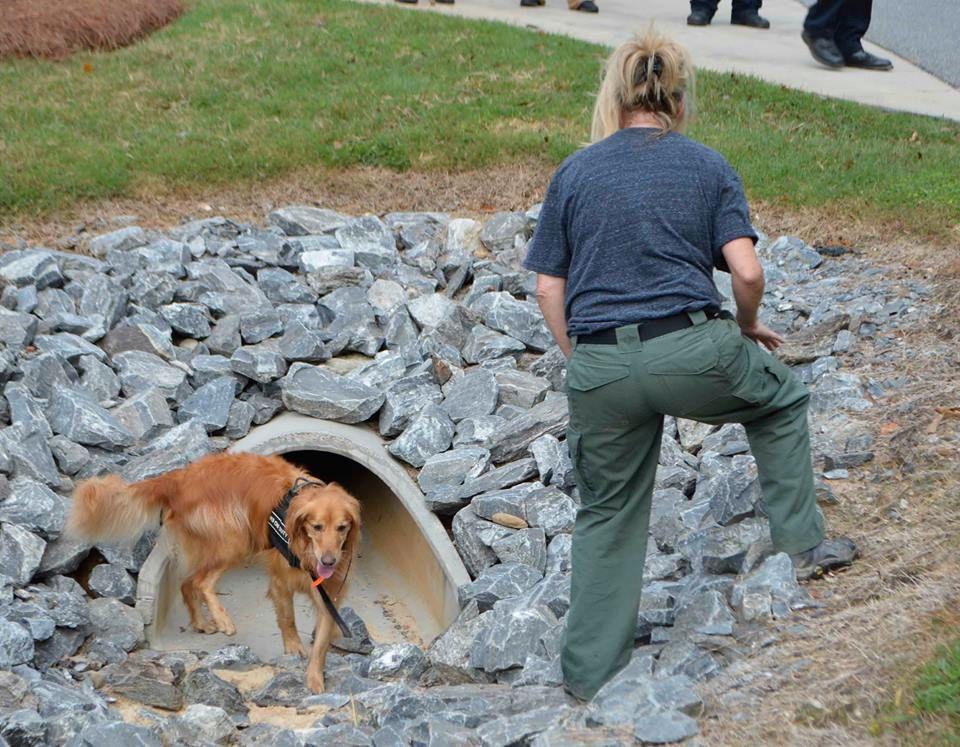 SØK: Frivillige organisasjoner har også søkt med hunder i parkens overløpsrør.