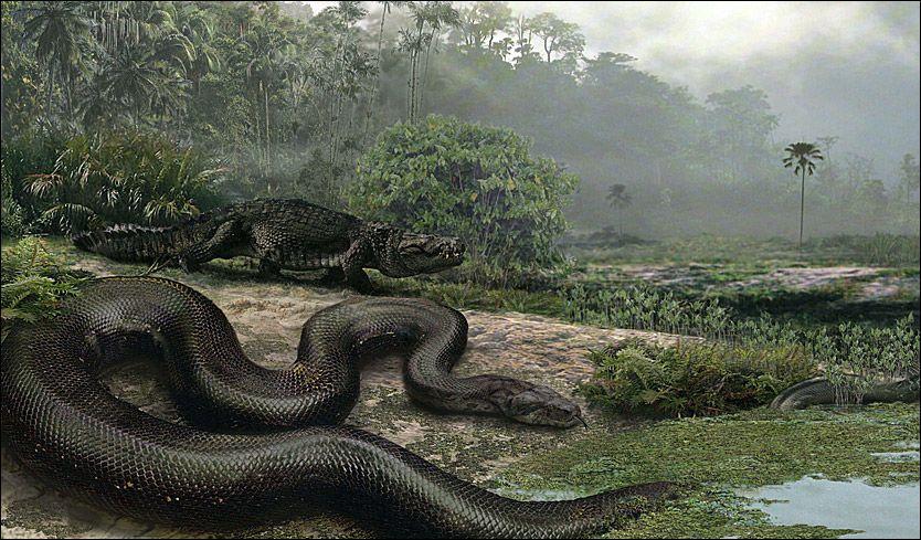 MONSTER: Denne 13 meter lange og ett tonn tunge slangen spiste krokodiller til frokost. Foto: AFP