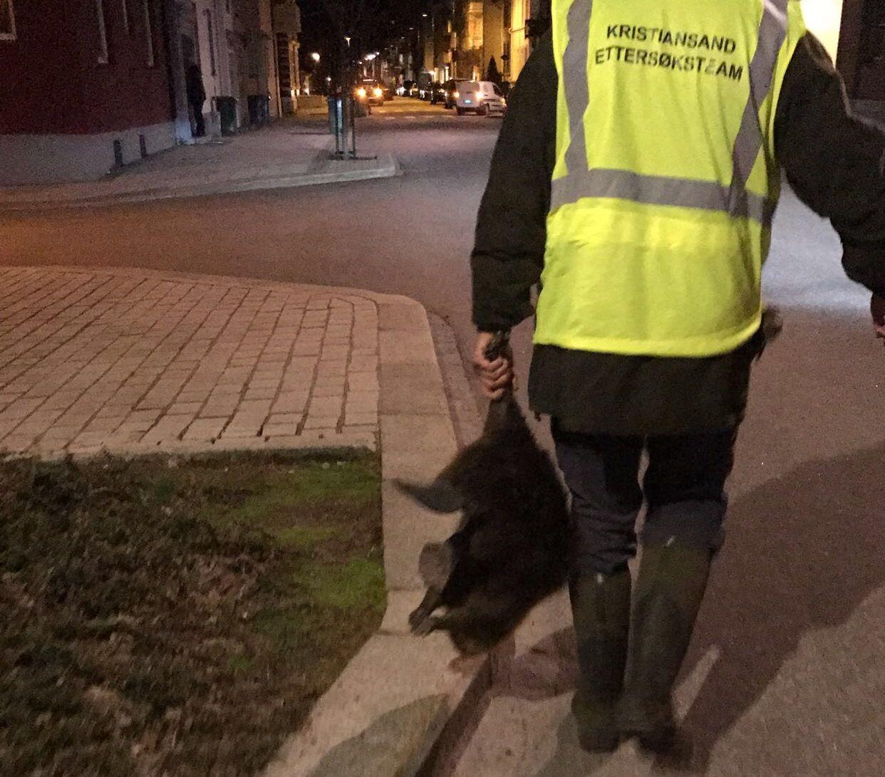 RIKTIG AVGJØRELSE: Dette bildet er tatt like etter at Tom Aurebekk Udø fra Viltnemnda har avlivet en bever i Kristiansand sentrum. Avgjørelsen viste seg å være helt riktig, sier Udø.