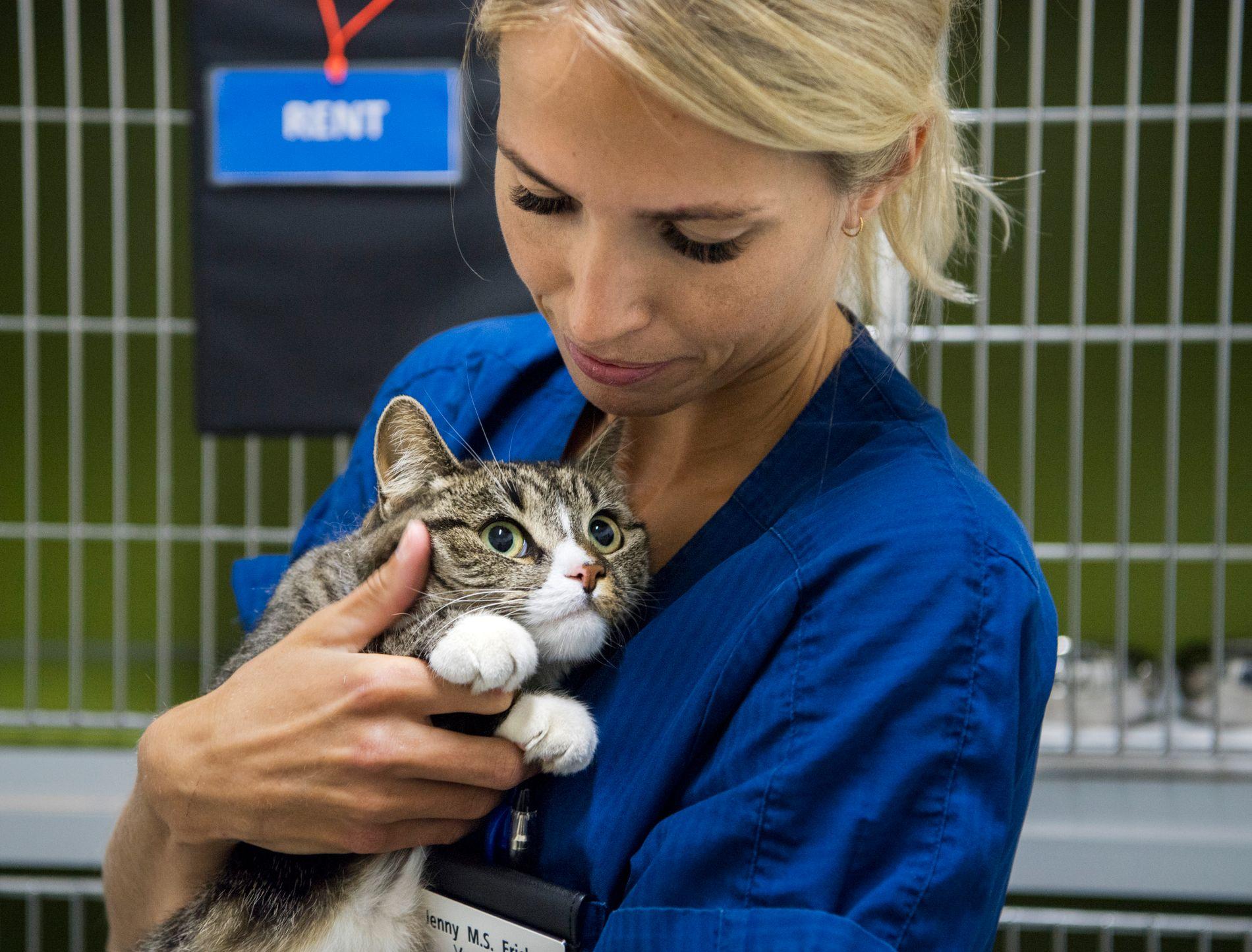PASSER PÅ: Både katter og hunder gir uttrykk for om de er for varme. – Katter kan bli slappe og apatiske når de er for varme, sier veterinær Jenny M.S. Erichsen ved Mosengs dyreklinikk i Oslo. Her med katten Suzy.