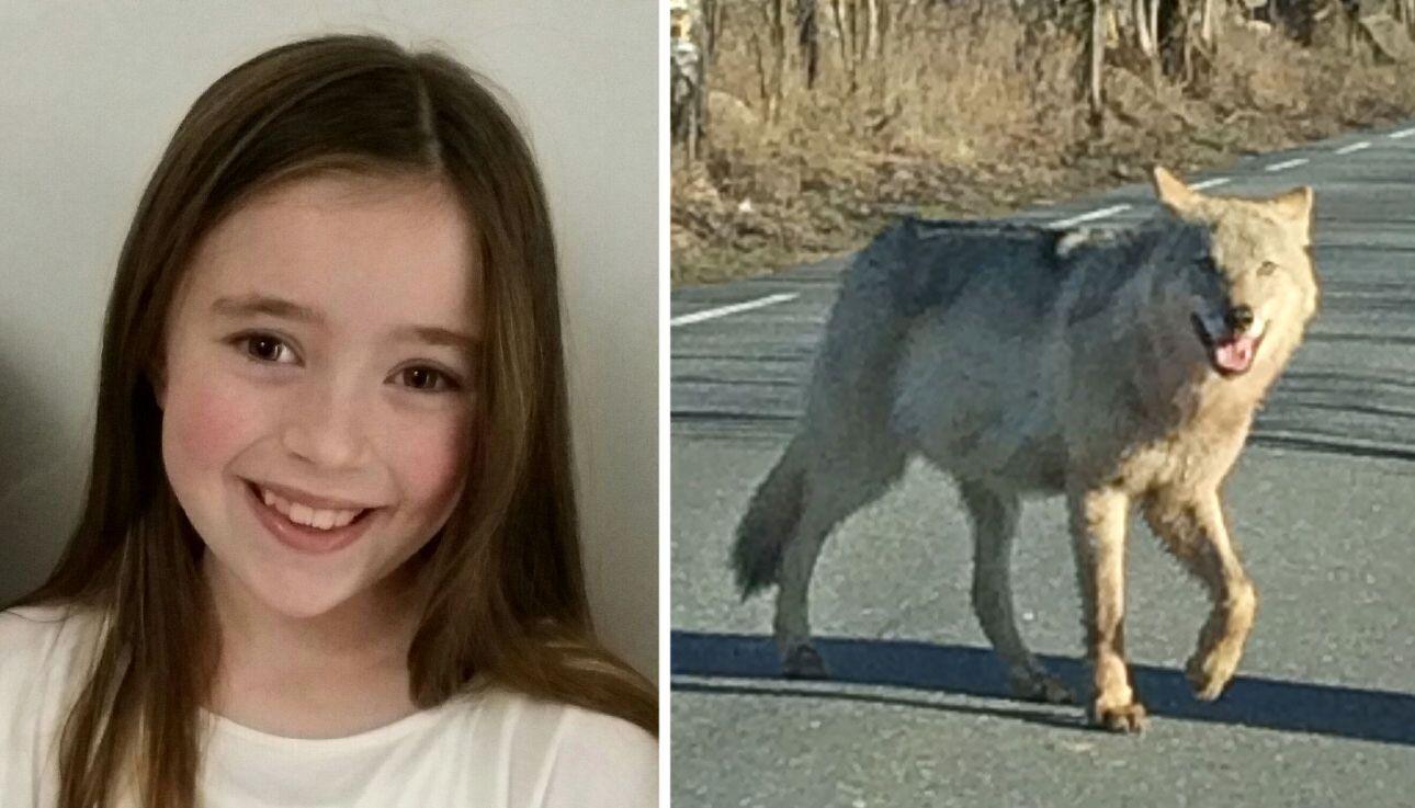 Live (10) var på vei til skolen - tok bilde av ulv