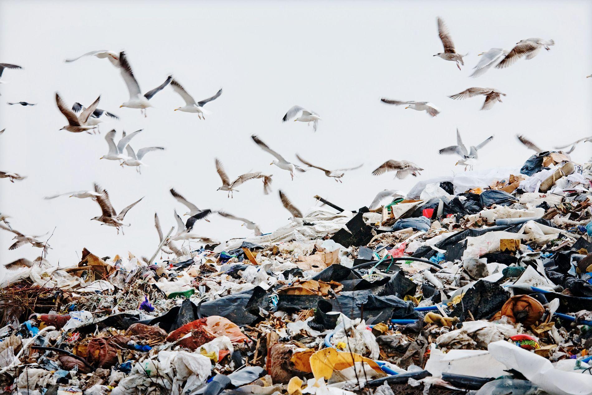 FORSØPLING: Plast har en nedbrytingstid på 450 år. Ifølge miljøminister Vidar Helgesen (H) er plast det raskest voksende forurensningsproblemet i vår tid.