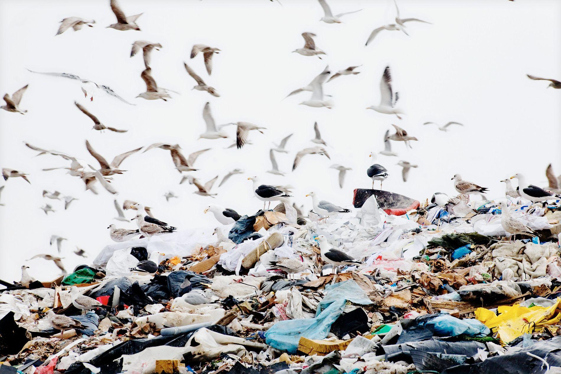 PLASTHAV: Mennesker er avhengig av næringskjeden for å fungere, når mikroplast har lurt seg inn i næringskjeden er det på tide å komme med noen tips til hvordan vi kan unngå det. FOTO: LINN CATHRIN OLSEN VG.