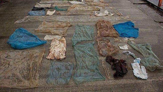 30 PLASTPOSER: Forskere har lagt ut plastposene som skjulte seg i gåsenebbhvalens magesekk.
