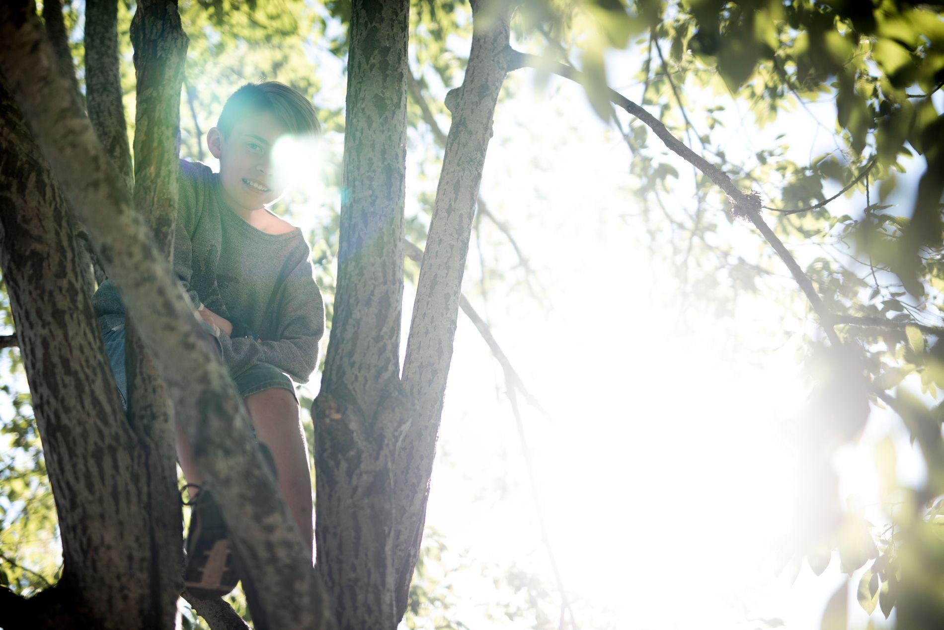 KLATRER: Trær er som trekkplaster for August. Da han begynte i den nye skolen, oppdaget han trærne i skolegården. De gikk fint an å klatre i, og det var helt greit for skolen.