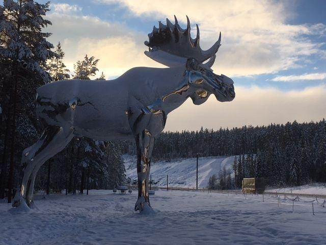 OVER TI METER HØY: Midt mellom Oslo og Trondheim står verdens største elg, Storelgen fra Stor-Elvdal.