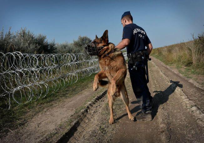 STENGER GRENSEN: Ungarn bygger et 179 km langt gjerde som skal hindre at flyktninger og migranter tar seg inn i landet uten å bli registrert. Enkelte steder er gjerdet ferdigbygget, andre steder består det fortsatt av sylskarp piggtråd. Likevel venter mange flyktninger på en mulighet til å snike seg under eller over piggtråden.