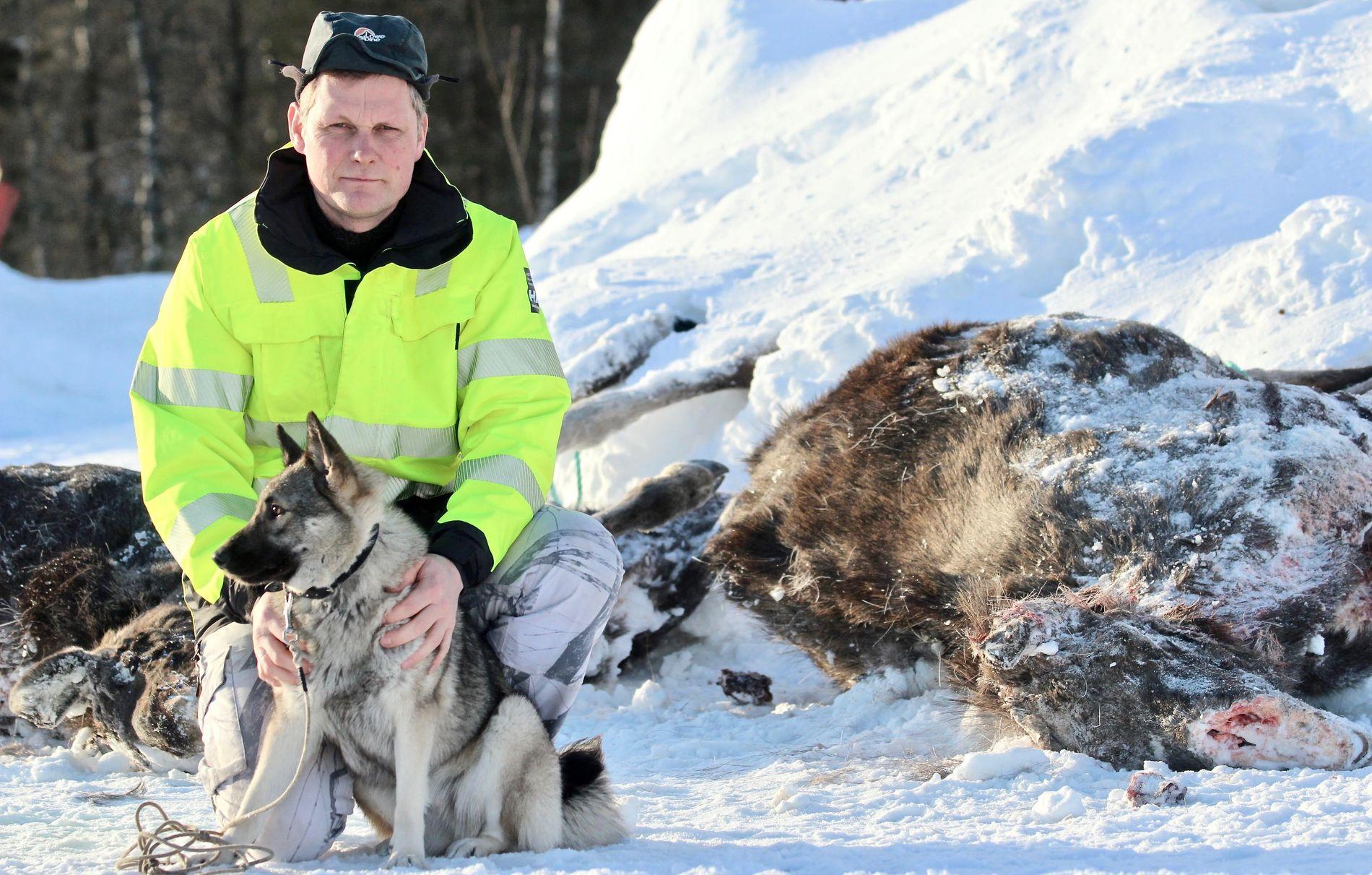 – BLODBAD: Geir Snefjellå jobber i Rana kommunes vilt-ettersøksgruppe. Hver gang en elg blir påkjørt må han, eller en av kollegene, rykke ut. Han omtaler det som et «blodbad».