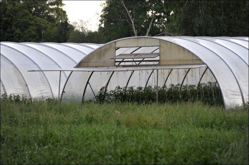 SMITTEKILDEN?:Gartneriet, som ligger i Ulezen, produserer en rekke ulike typer bønnespirer. Søndag ble gården stengt inntil videre. Foto: Ap