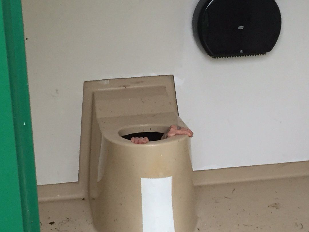 IN NEED OF HELP: The man tried to climb out of the toilet on his own, but gave up and requested help.