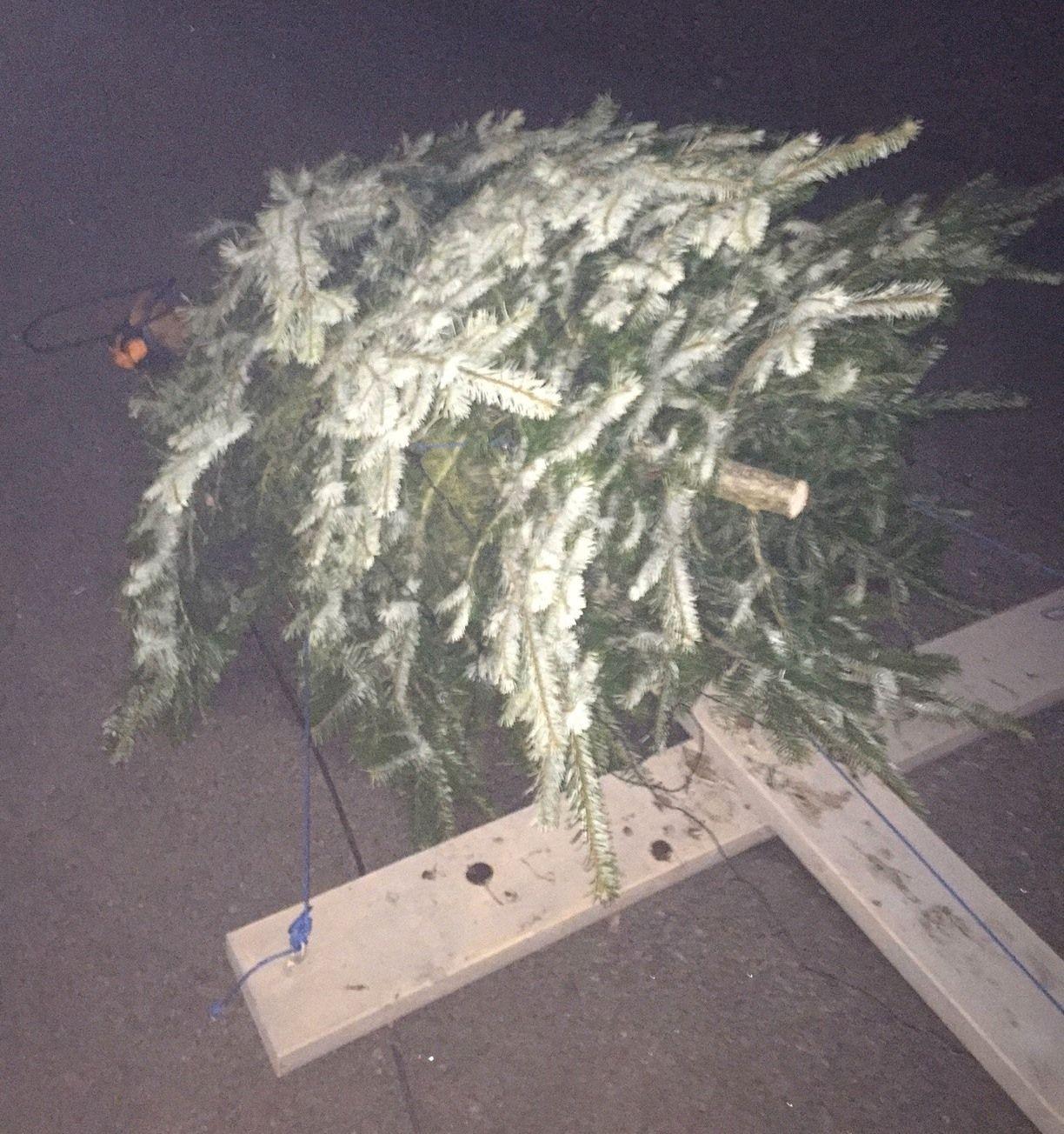 SAGD: Slik så juletreet til Lysejordet skole ut.