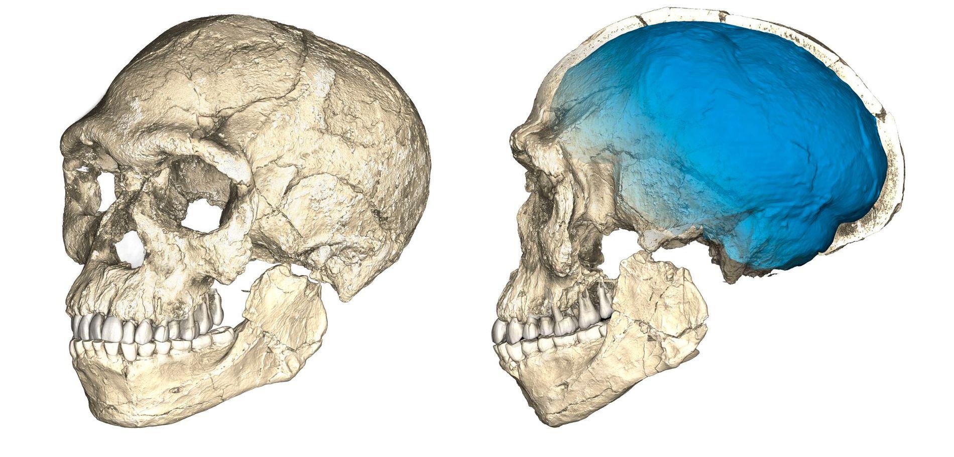 REKONSTRUKSJON: 300.000 år gamle fossiler som har blitt funnet i Marokko og satt sammen viser at Homo sapiens levde også da.