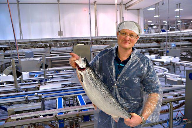 LAKSEMANN: Nordlaks-sjef Inge Berg er god for over tre milliarder kroner, men er fortsatt aktiv i fabrikken hvor den ene laksen etter den andre er på vei mot pakking.