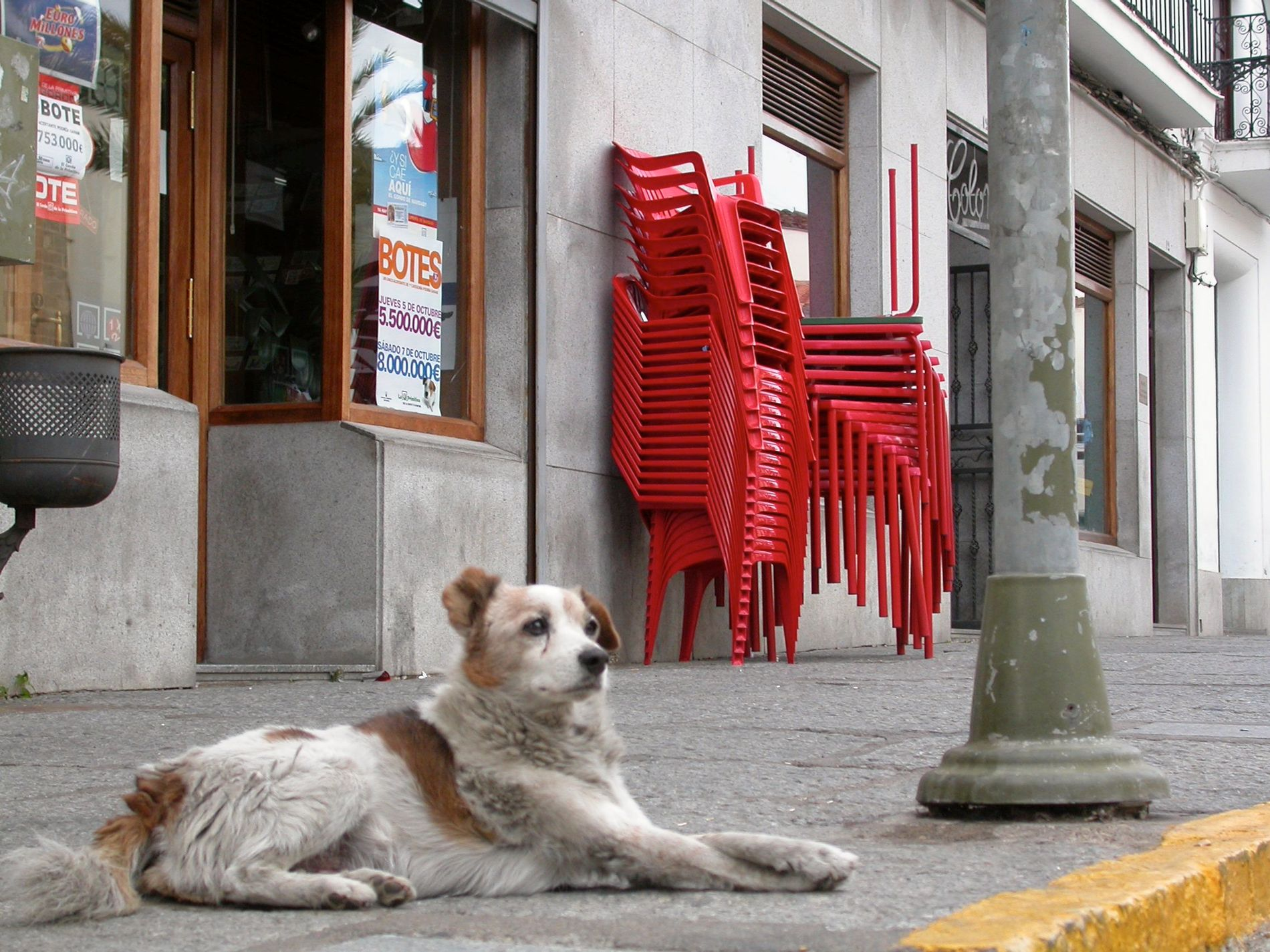 Her er en gatehund avbildet i den spanske byen Jerez de los Caballeros i 2006.