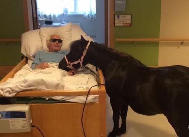 STAS: Karl Holmen hadde selv hest da han var ung, og har tatt stor del i barnebarnet Susans hesteinteresse. Derfor var det ekstra stas å treffe shetlandsponnien Bolla på sykehjemmet.