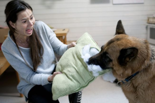 VÆR OBS: Enkelte matvarer kan skade hunden din, selv om de er helt ufarlige for mennesker. Dyrlege Silje Hvarnes forteller hva som er greit å gi og hva du må styre unna.
