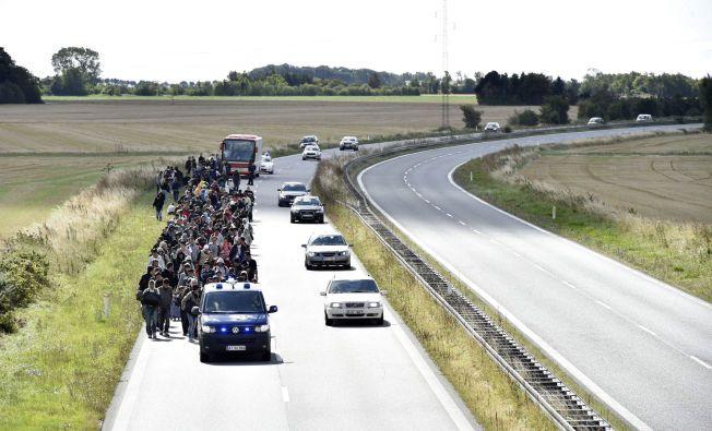 PÅ VEI TIL SVERIGE: En stor gruppe flyktninger gikk langs veien mandag utenfor Rødby mandag. De skal ifløge reportere på stedet ha ropt «Malmö, Malmö» og vandret nordover.