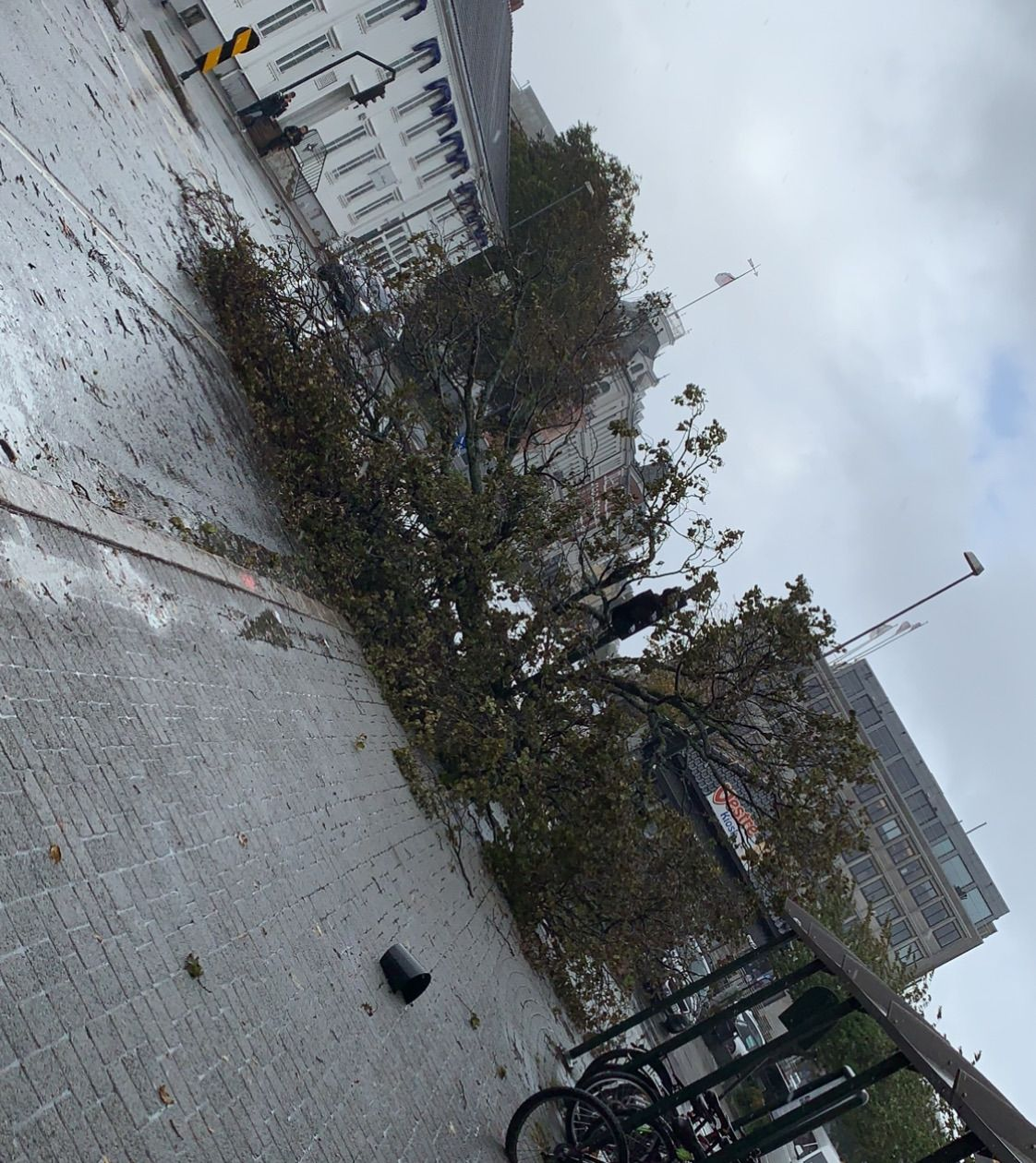 Et tre har falt over veien ved Kristiansand rutebilstasjon.