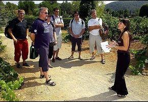 Lær deg å nyte Provence