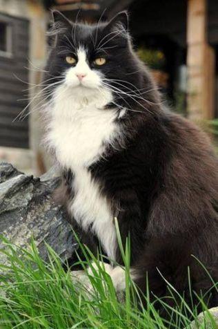 SOSIAL: Savnede Kjell (16) blir beskrevet som en kjælen, sosial, snill og tunghørt katt. Foto: Privat