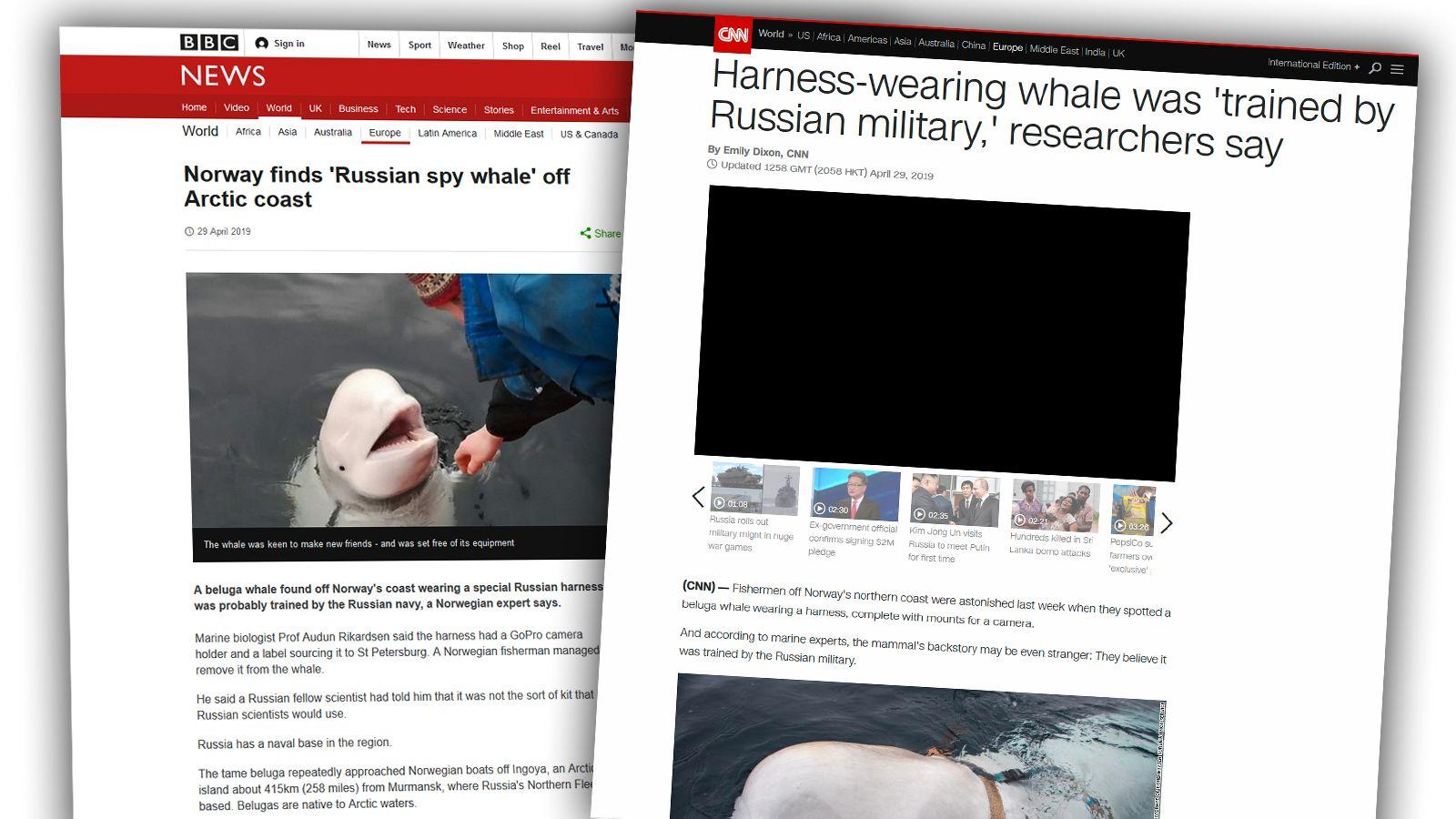 VERDENSKJENT: Hvithvalen som oppsøkte fiskere ved Tufjord har skapt stor oppmerksomhet i medier rundt om i verden.