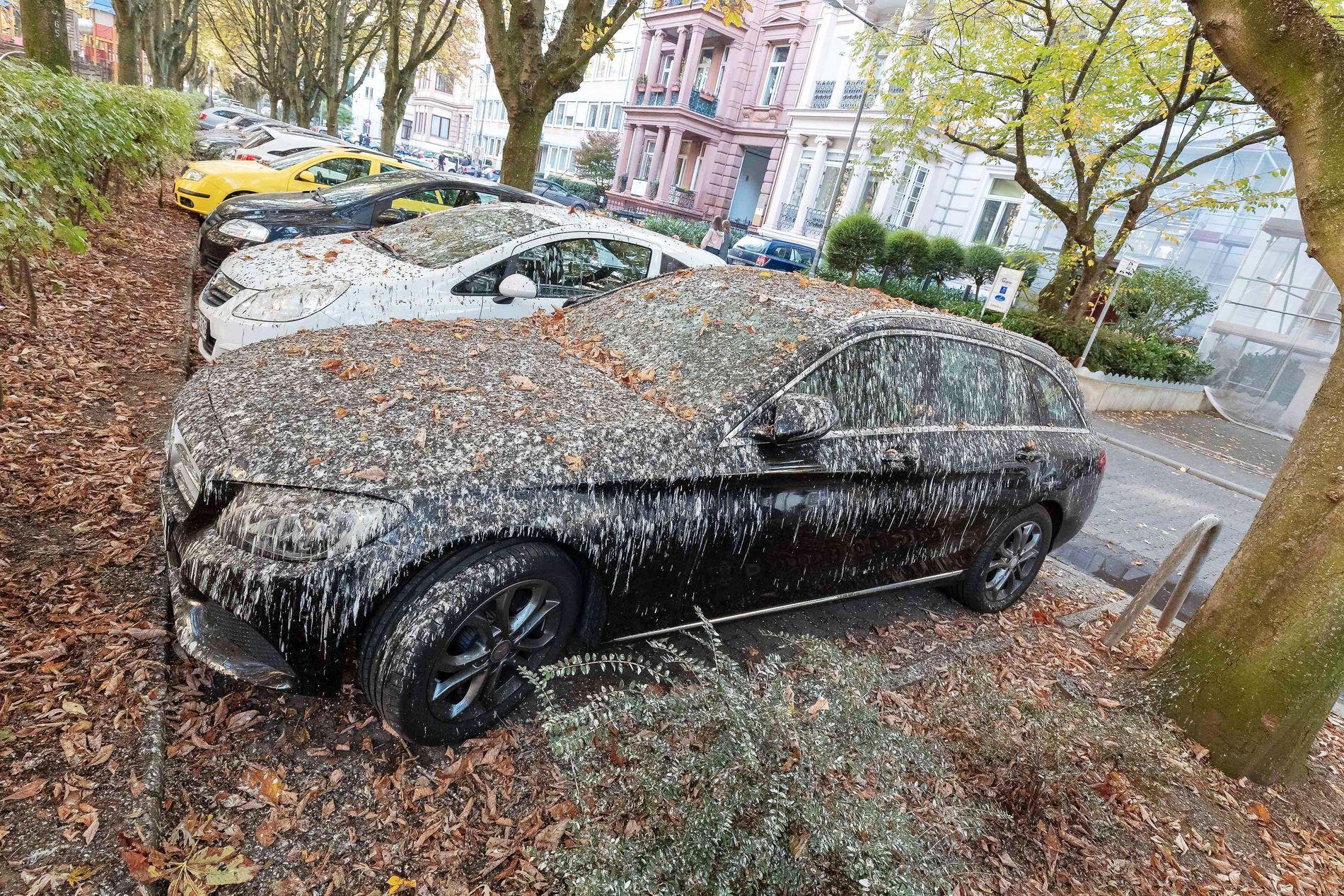 HOLY SHIT: Det er ikke snø eller bare godt gammelt skittvær som har rammet bilene i Wiesbaden. Det er fugleskitt.