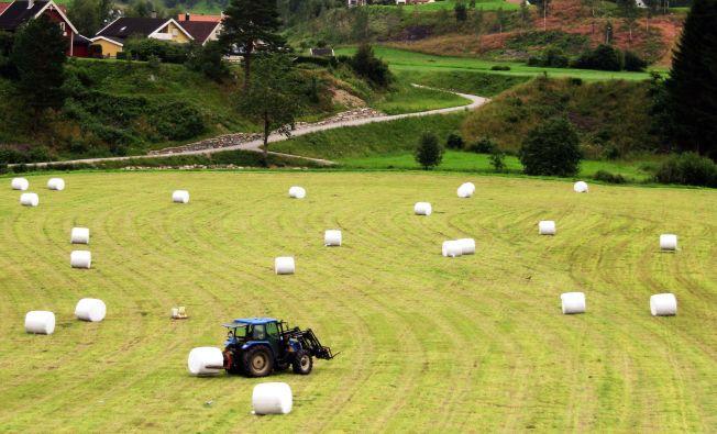 KORN: Stadig mindre areal brukes til å dyrke korn i Norge. Bildet er fra Vik i Sogn.