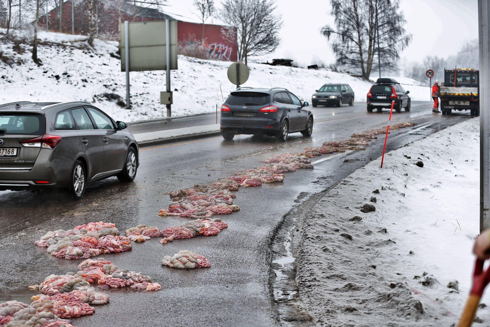 TARMLENGDES AVSTAND: På en sidevei til E18 i Sandefjord ligger innvollene strødd.