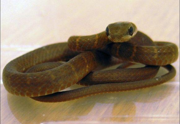 Fant slange på flyplass i Glasgow