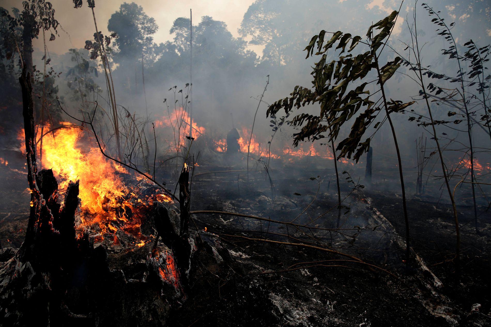 PRESS: Brasils regjering opplever økende internasjonalt press som følge av brannene i Amazonas.