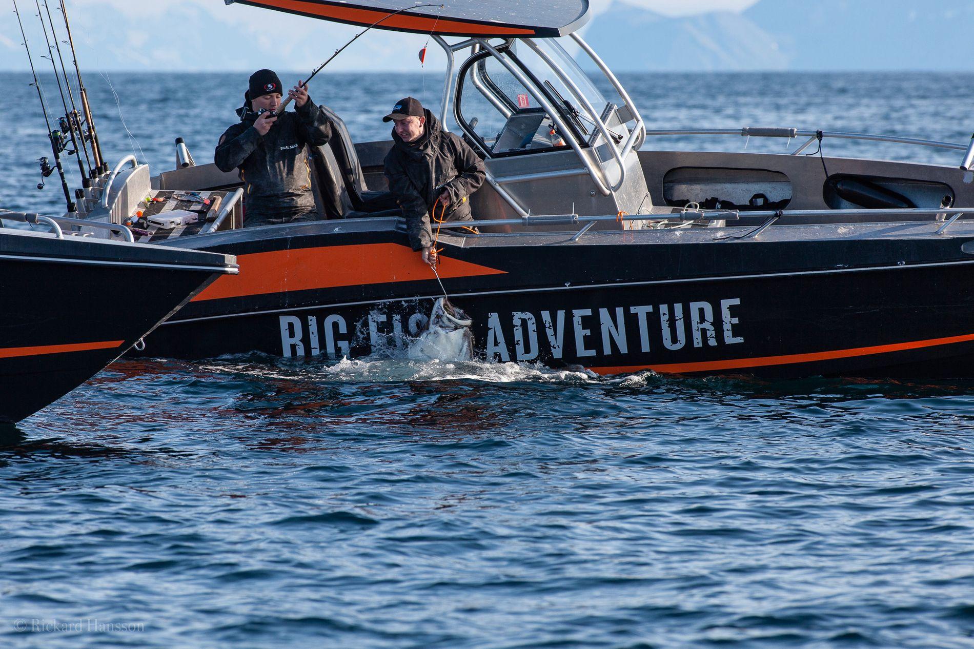 TUNG: Den 124 kilos tunge fisken tok cirka en halvtime å få dratt opp.
