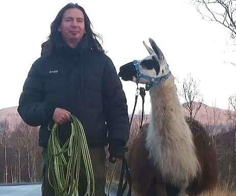 DRAMA: Har du sett en lama eller to? Nå er det leteaksjon på Senja etter lamaene til Berit Aasnes Hofsøy og Odd Brede Sommarset. Foto: PRIVAT
