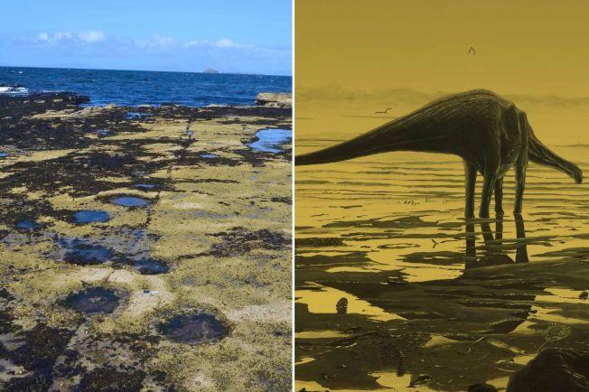 SER DU FOTSPORENE: De mange forsenkningene her er satt av de pillarstore føttene til dinosaurer for 170 millioner år siden. Ved siden av er en tegning utgitt av universitetet i Edinburgh av hvordan giganten kan ha sett ut i sitt andre element. Foto: REUTERS
