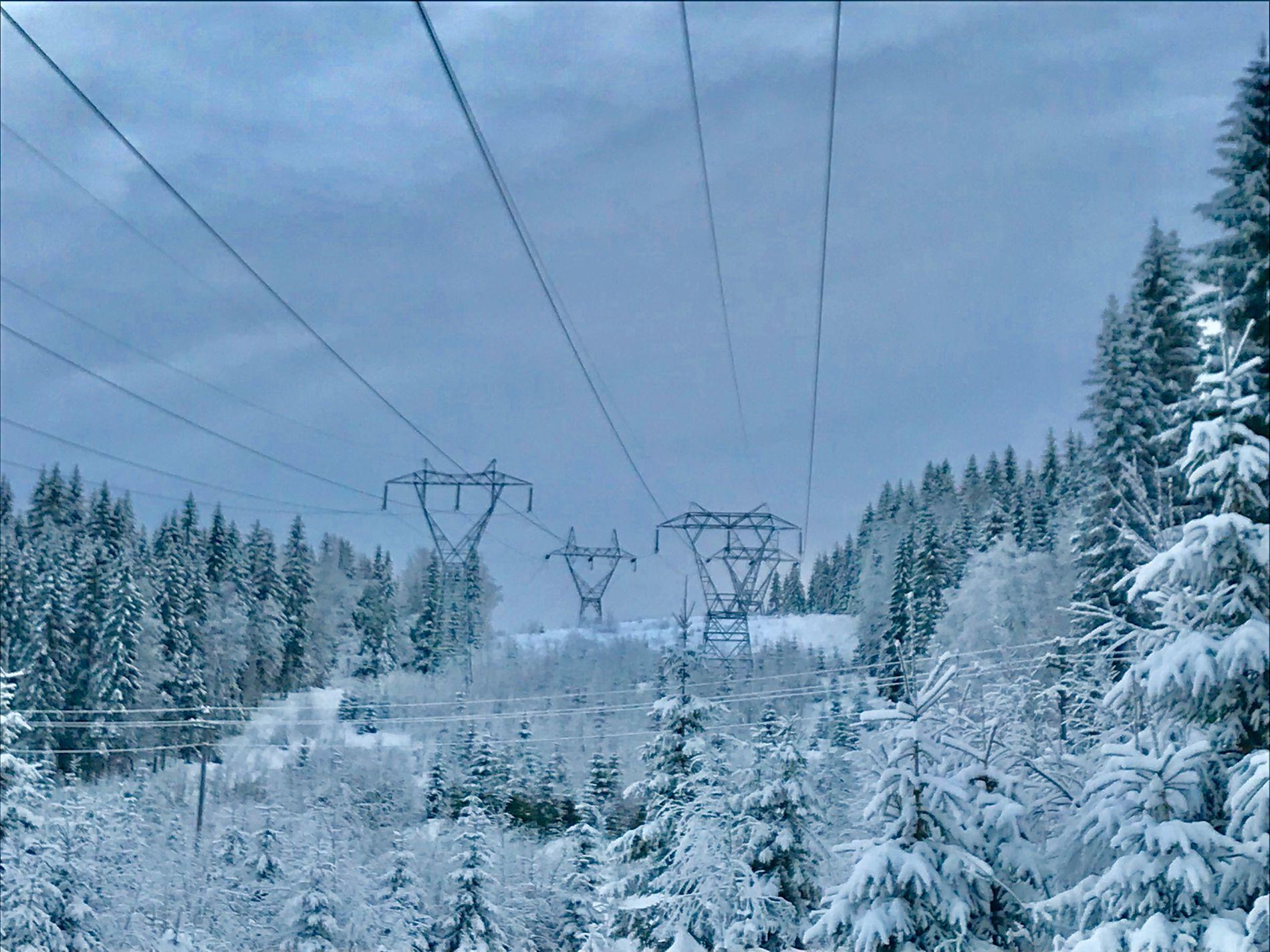ISKALDT: I Nordmarka i januar i år var trærne dekket av snø. Nå frykter forbrukerdirektøren at et nytt forslag vil gjøre folk reddere for å bruke strøm når det er såpass kaldt ute som her.