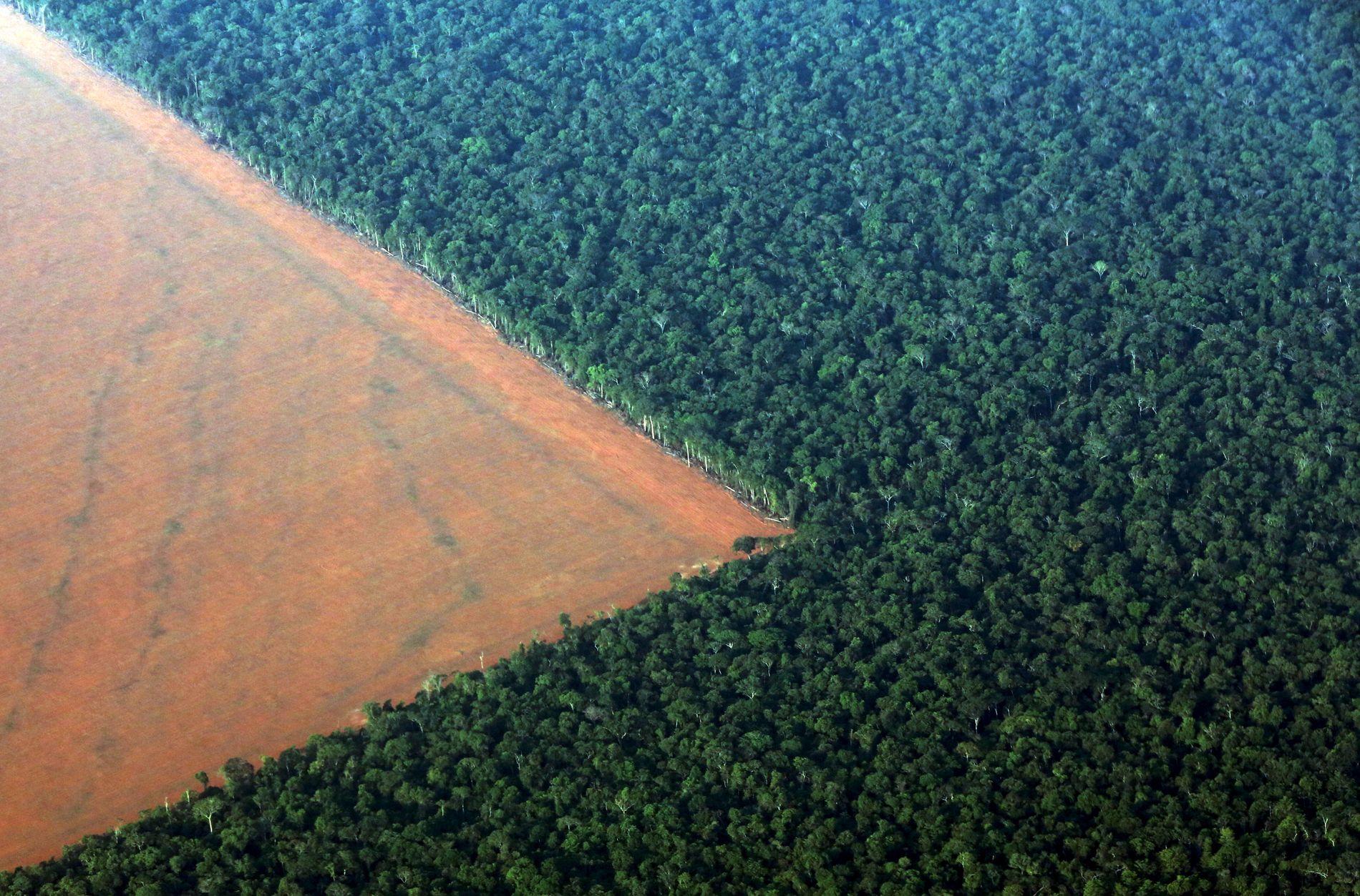 AVSKOGING: Et stykke av Amazonas er ryddet i den brasilianske delstaten Mato Grosso, for å brukes til å dyrke soyabønner.