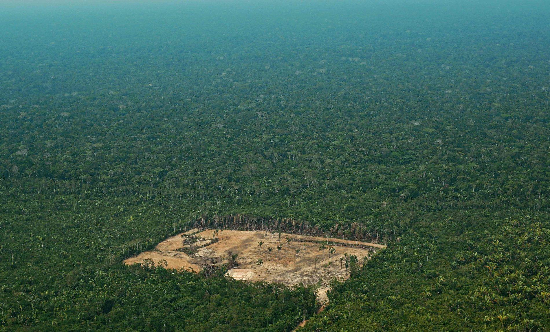 AVSKOGING: Et oversiktsbilde viser avskoging i Amazonas.
