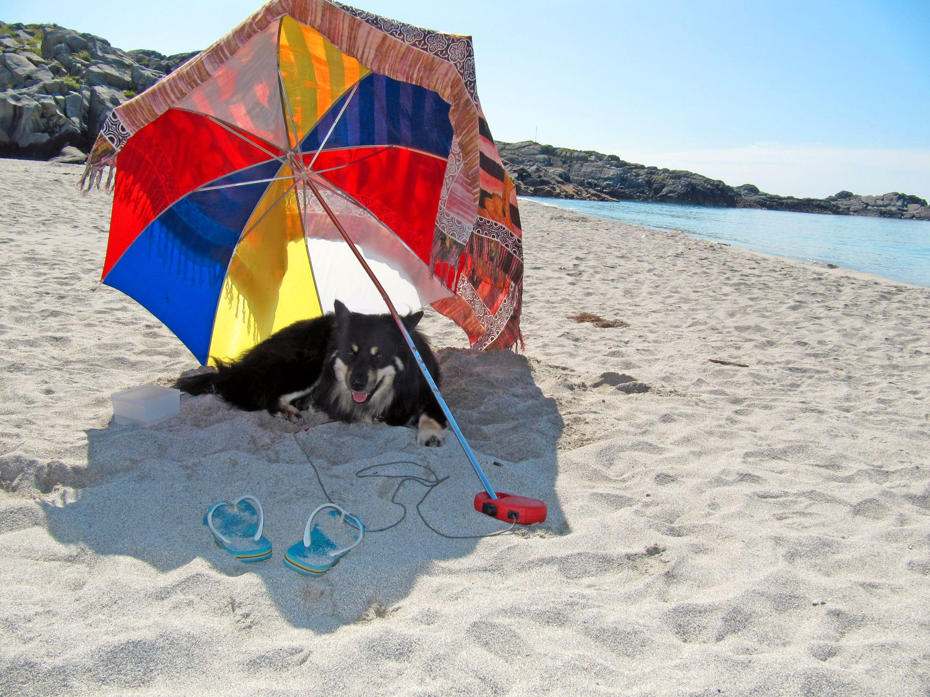 PASS PÅ: Dyr trenger skygge, væske og ekstra oppmerksomhet når det er mye sol.
